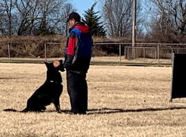 IGP/Schutzhund Trainer, Joseph Lin, & Armus Vom Boomerbucht IPO1, IGP2 (Earned at Regionals), IGP3