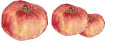 Pâte de pomme
