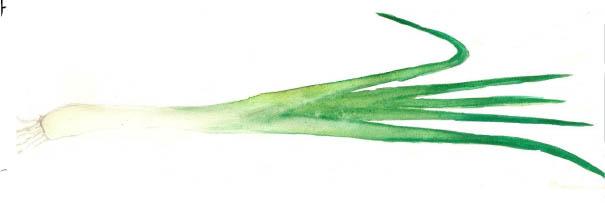 Pesto blanc de poireaux