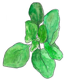 Pesto épinard