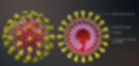 Coronavirus-structure1-1-21-20.png