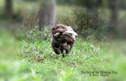 Kitt w pheasant copy