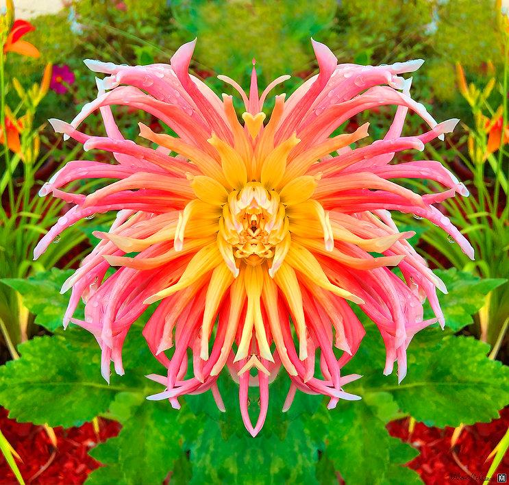 SOUL FLOWER.jpg