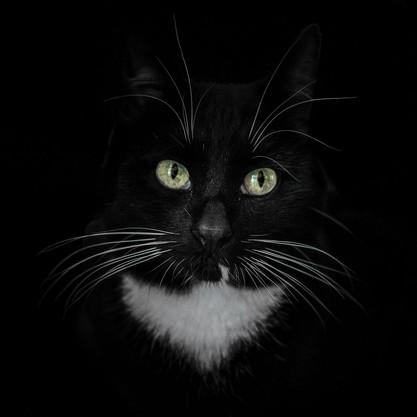 Cat-Eyes 2