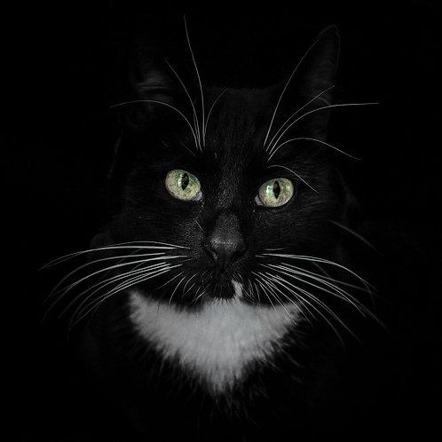 Cat-Eyes II (Bild-Nr. 01030016)