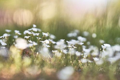 Flower-Power (Bild-Nr. 01030005)