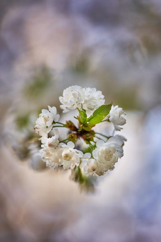 Blüten-Pracht