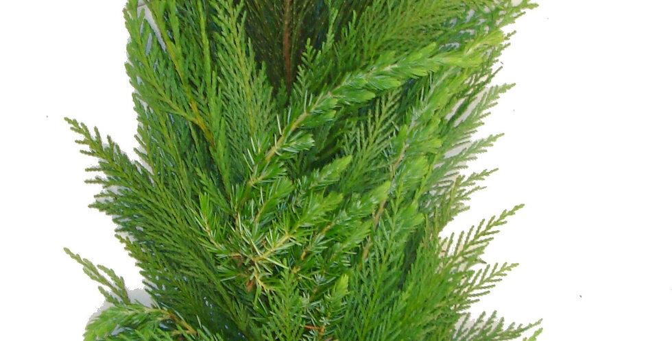 Leyland, Ming Pine & Blueberry Cedar Garland