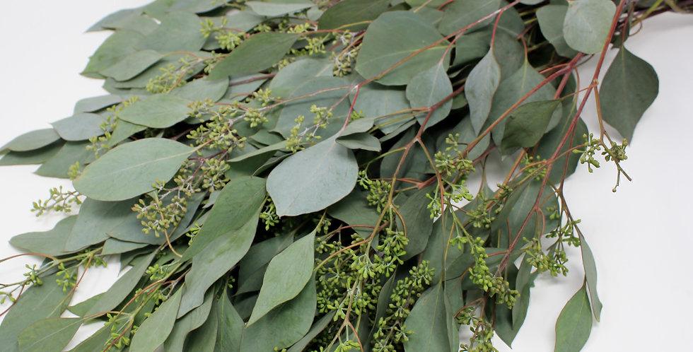 Seeded Eucalyptus