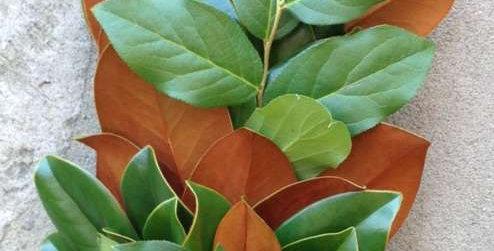 Magnolia & Salal Garland