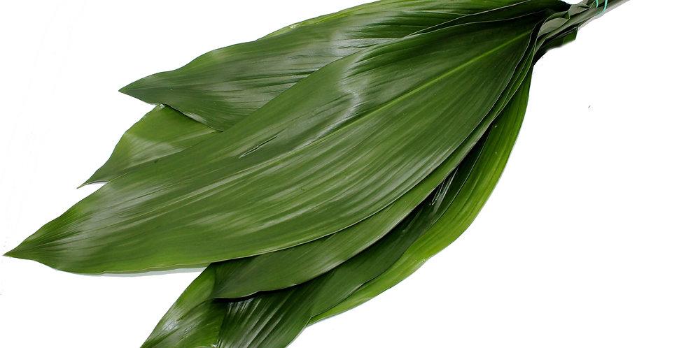 Aspidistra (green)
