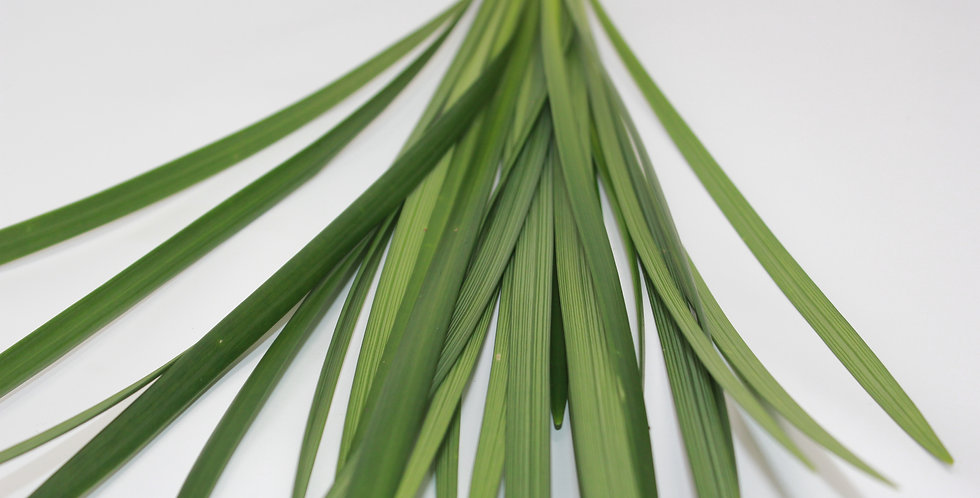 Lilly Grass