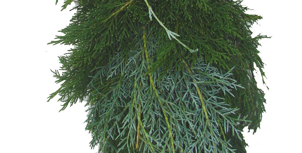Gold Tip Carolina & Leyland Cypress Garland