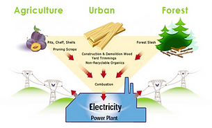 Biomass-Energy-Biomass.png