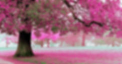 Spring Collection Banner.jpg