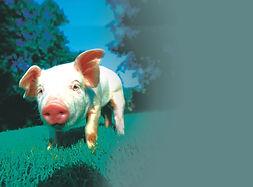 C10 conc piggy.jpg
