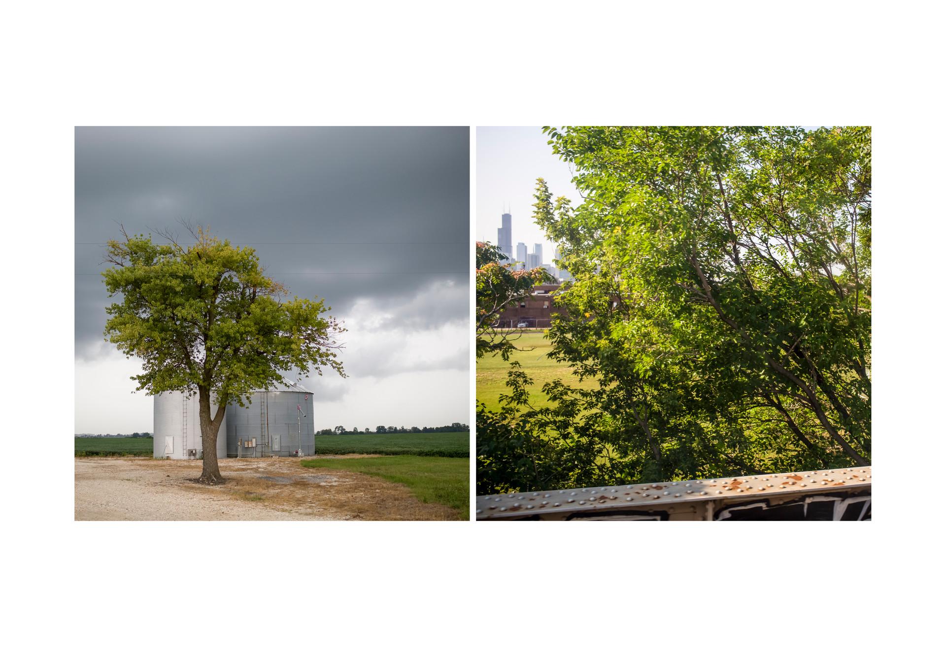 trees + buildings