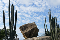 Mooie Cactus Eiland.png