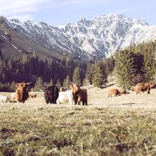 Zwitserland in de bergen.jpeg