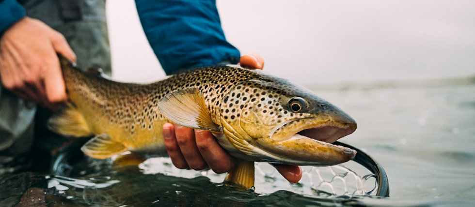 Live Fischen mit Support