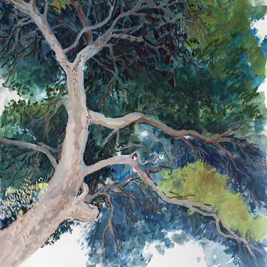 Tree in Italy