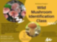 Fall class 2020.png