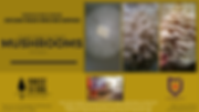 Copy of how to grow Mushrooms FBEC.png