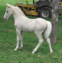 2002 anna filly best.jpg