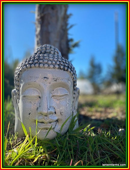 Buddahs (1)-003.jpg