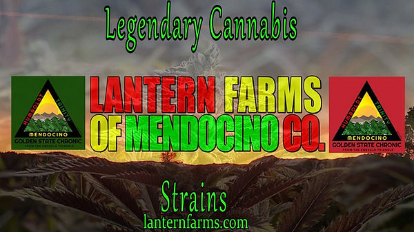 Lantern Farms of Mendocino Header.jpg