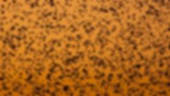 DSC01734-starling_edited.jpg