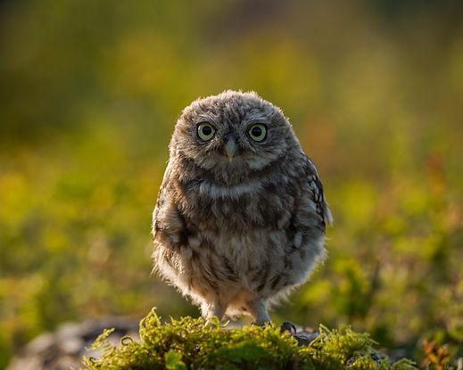 DSC07614-owl-print.jpg
