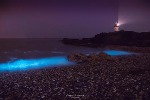 Bioluminescence, Penmon Point, Anglesey