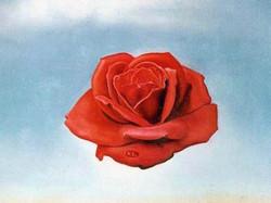 rose d'éternité de Dali