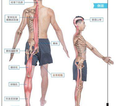 拒絕運動傷害,伸展肌筋膜第一步,從淺背線開始吧!