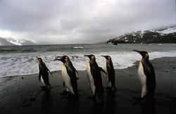 900 - 28 penguins on beach