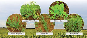 cover crop resource guide
