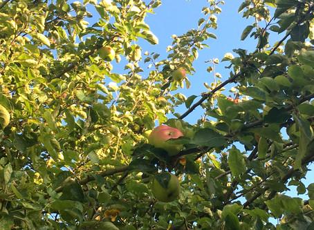 Mellow fruitfulness: autumn's natural fortification