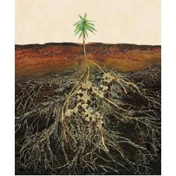 Soil Fungi for future harvests