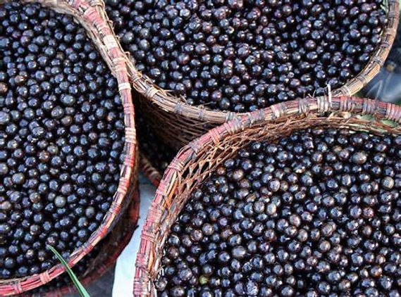 acai berry bundles.jpg