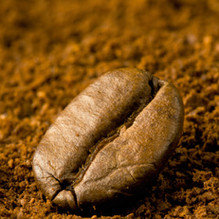 Coffee Bean amongst ground coffee.jpg