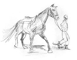 horse16.png