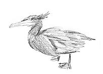 bird_heron3.png