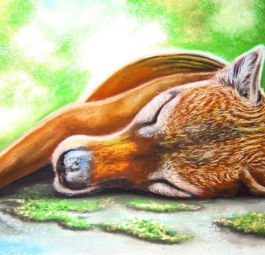 Sleeping Thylacine - Soft Pastel