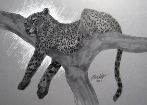 Leopard -ink.png