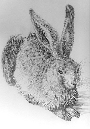 Hare drawing in pen and ink.jpg