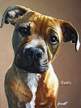 'Eadie' pet portrait commisson - soft-pa
