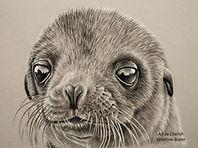 Sea Lion Pup - Charcoal.jpg