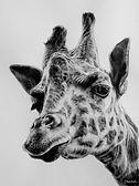 Giraffe - Graphite.jpg