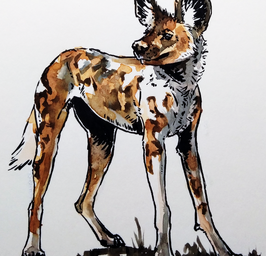 African Painted Dog -watercolour